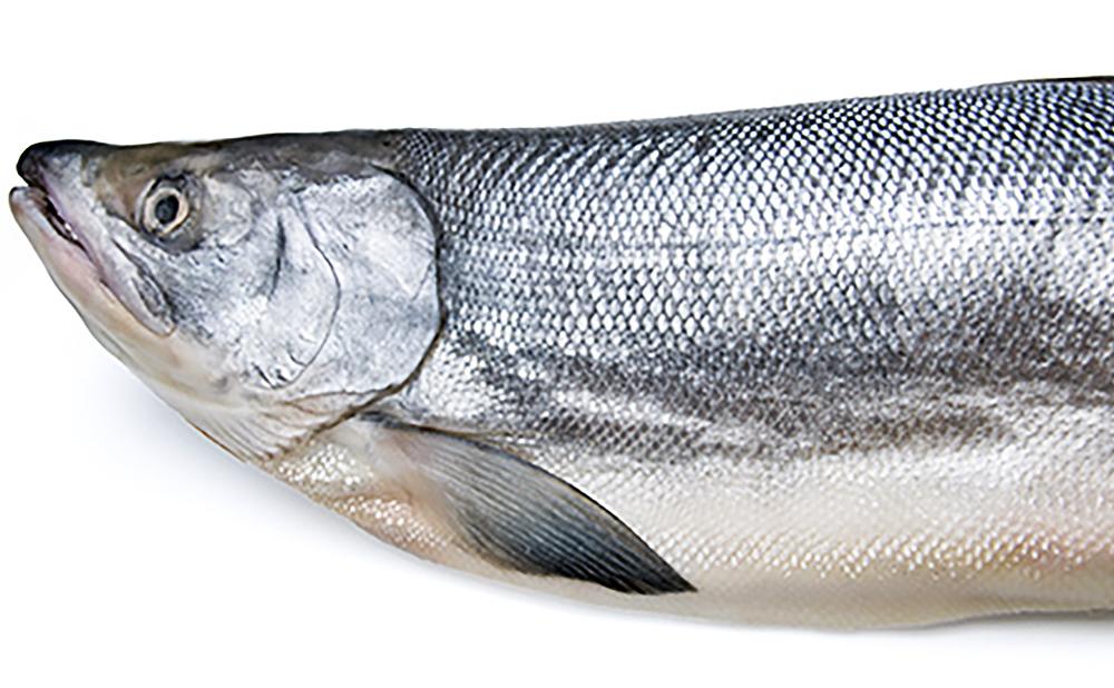 salmon_1000x618
