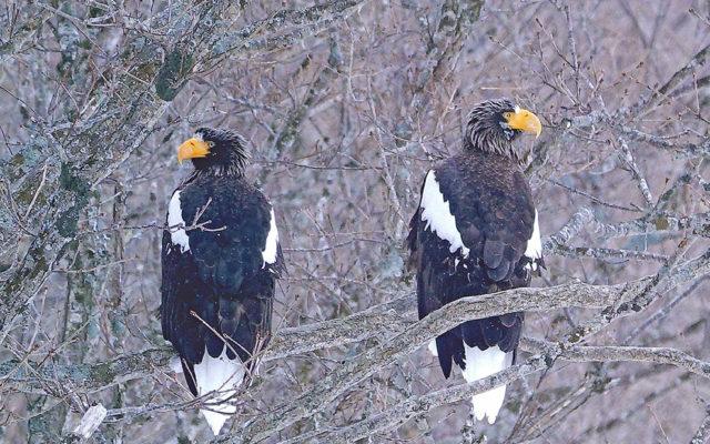 大鷲と冬の森