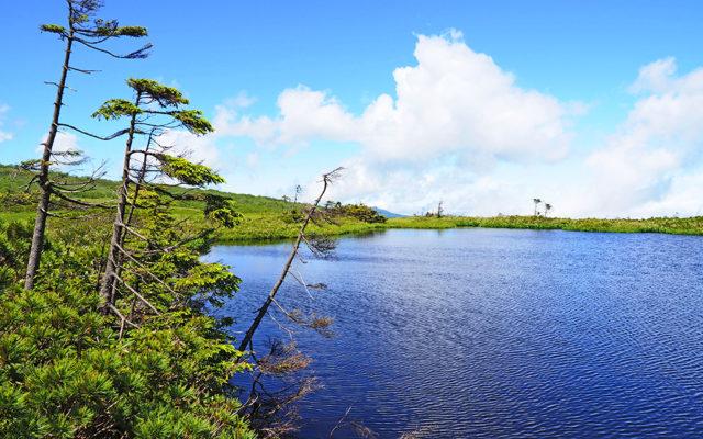 夏のピヤシリ湿原