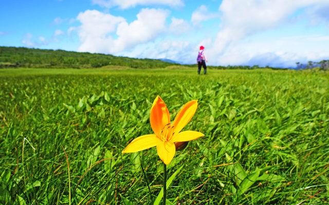 湿原に咲く花