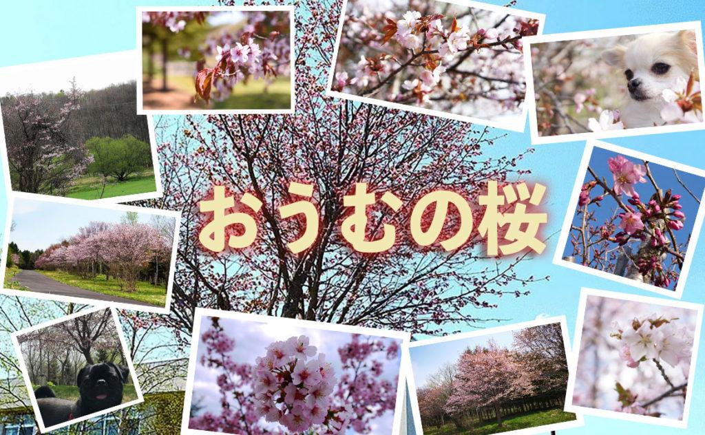 おうむの桜アイキャッチ