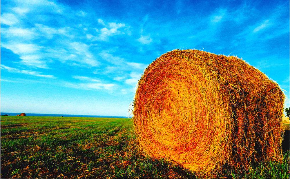 0004牧草ロールと秋の空
