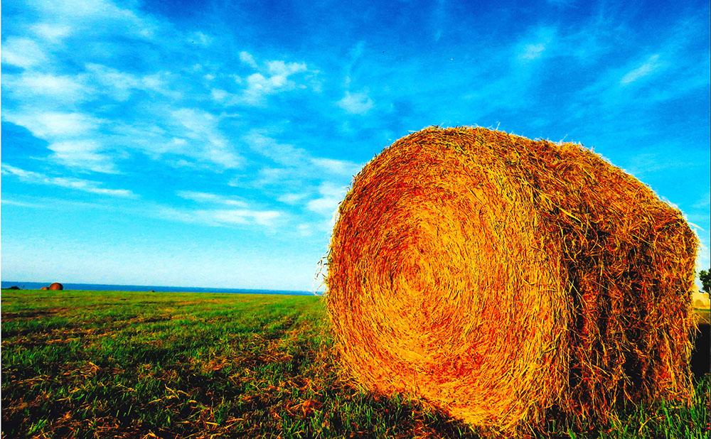 牧草ロールと秋の空