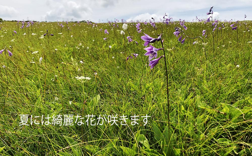 ピヤシリ湿原Image05
