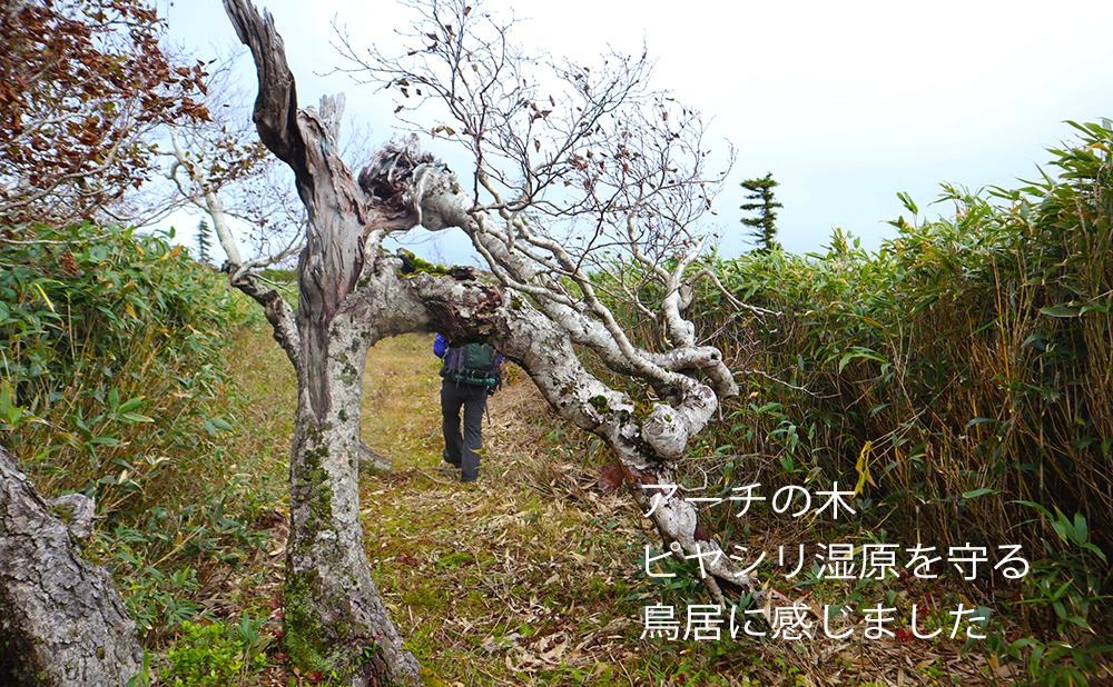 ピヤシリ湿原00IMG_1433のコピー