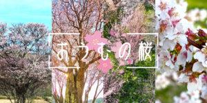eye_sakura